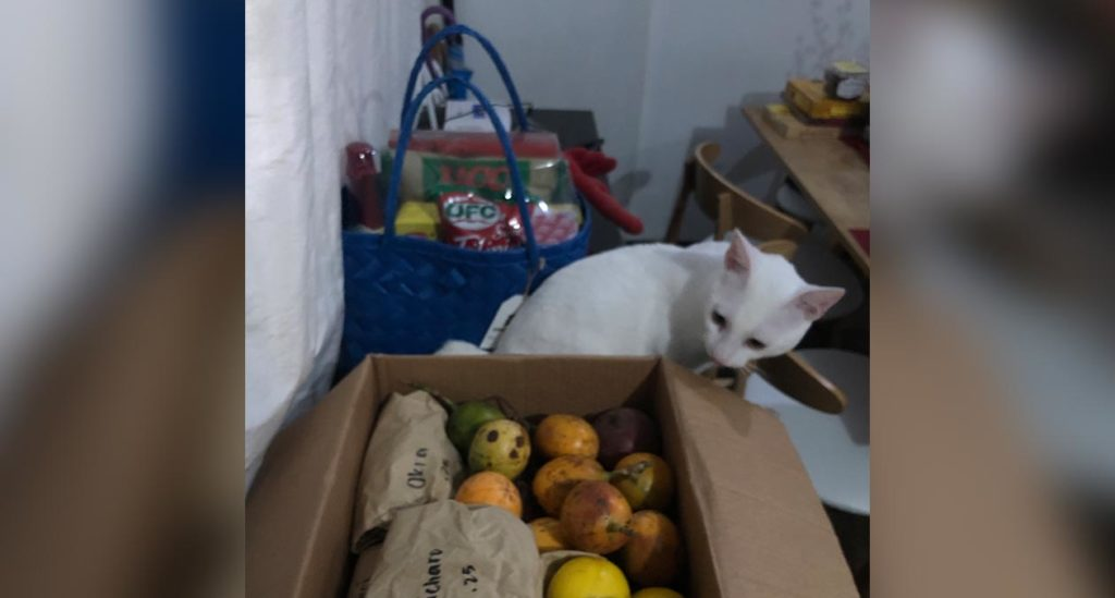Cat looking at box of fruits and vegetables